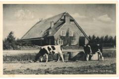 NOP - Boerderij11